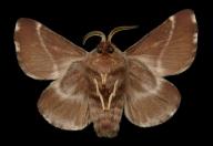 w1_moths
